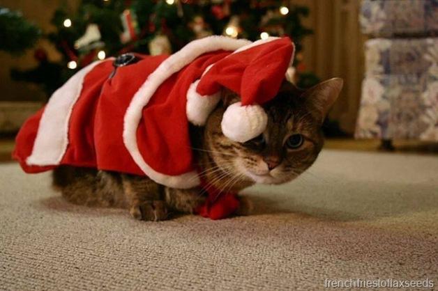 ChristmasSienna.jpg