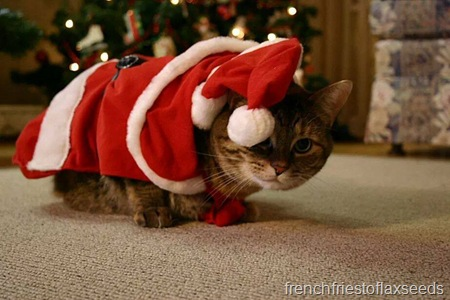 Christmas Sienna
